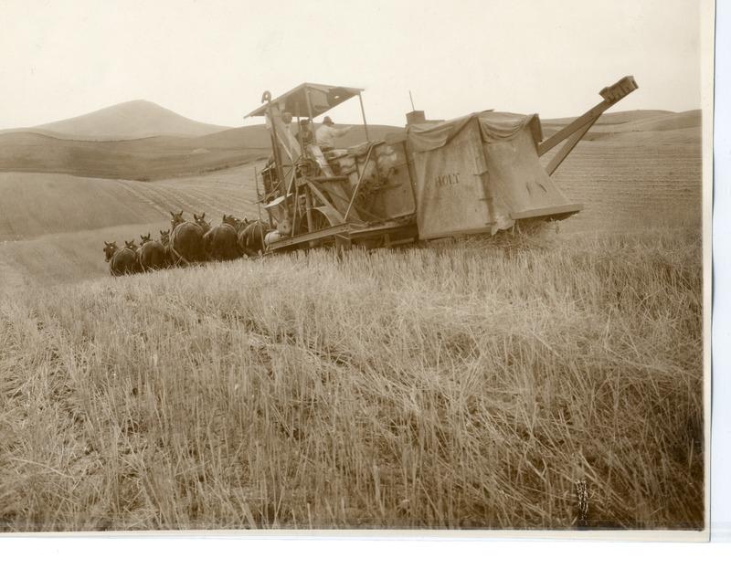NW Wheat & Wheat Farming (#18).tif