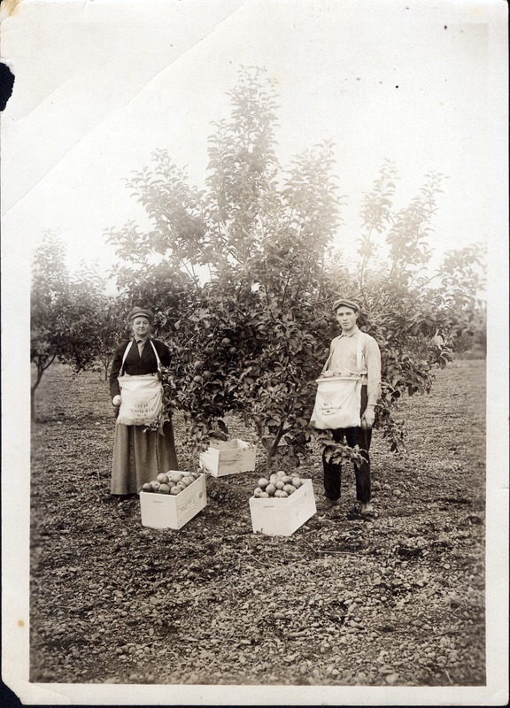 Spokane Valley Apple Orchard-Raymond (#3).tif