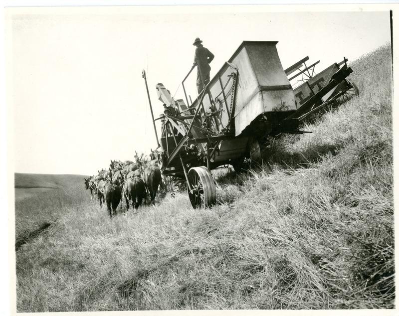 NW Wheat Farms & Farming004.tif