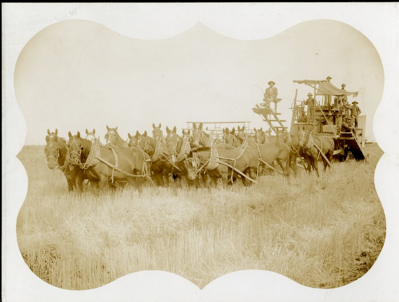 NW_Wheat_and_Wheat_Farming002.tif
