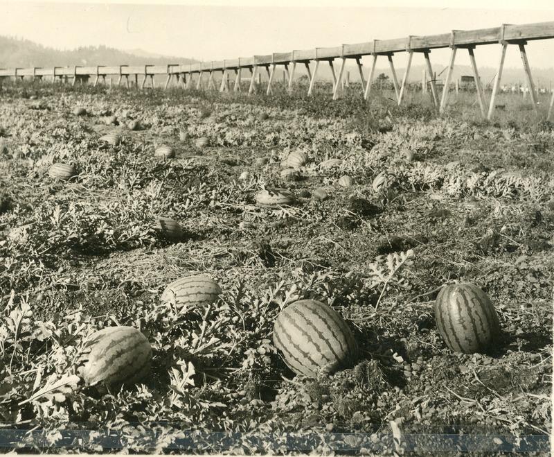 Spokane Valley-Agriculture (#8).tif