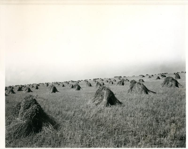 NW Wheat Farms & Farming014.tif