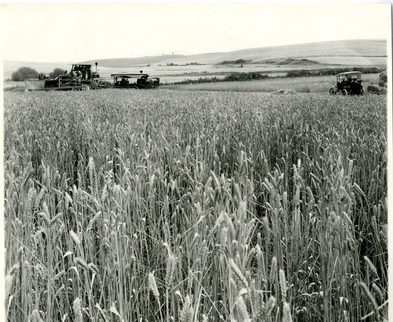 NW Wheat Farms & Farming013.tif