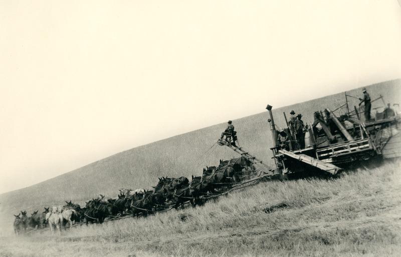 NW_Wheat_and_Wheat_Farming009.tif
