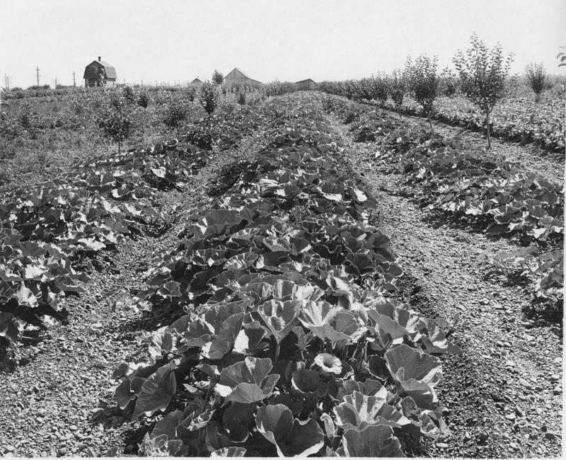 Spokane Valley-Agriclulture  (#23).tif