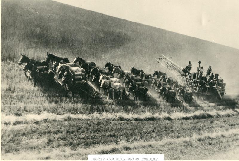 NW WheatandWheat Farming (#07).tif