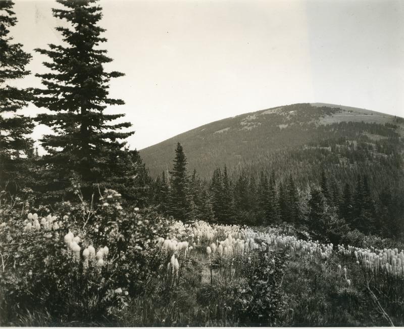 Northwest--Wildflowers#3.tif