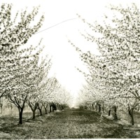 SpokaneValley_Apples025.tif