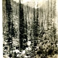 NW_Idaho_LoloPass001.tif
