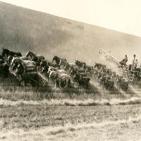 NW_Wheat_and_Wheat_Farming026.tif