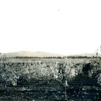 SpokaneCounty_Agriculture006.tif