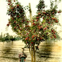 SpokaneValley_Apples020.tif