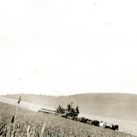 NW_Wheat_and_Wheat_Farming029.tif