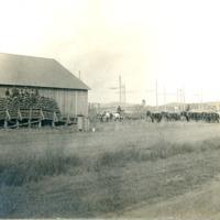 NW_Wheat_and_Wheat_Farming_Steptoe002.tif