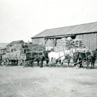 NW_Wheat_and_Wheat_Farming_Churchill004.tif