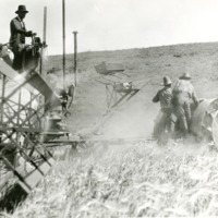 NW_Wheat_and_Wheat_Farming022.tif