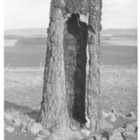 Indians_Treaty_Tree03.tif