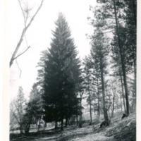Spokane_Finch_Arboretum014.tif