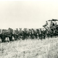NW_Wheat_and_Wheat_Farming005.tif