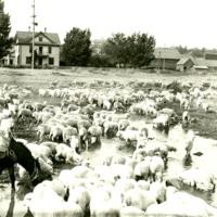 SpokaneCounty_Agriculture019.tif
