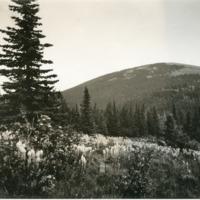Northwest -- Wild flowers (#03)
