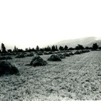 SpokaneCounty_Agriculture003.tif