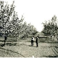 SpokaneValley_Apples024.tif
